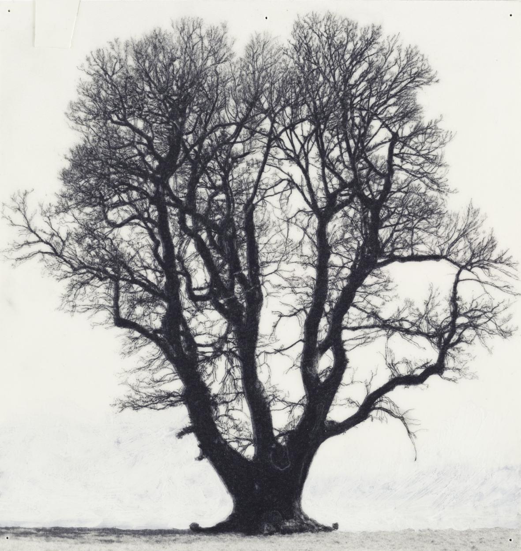 Patrick Van Caeckenbergh, Tekeningen van oude bomen (zomer 2010), 2010, Pentel 120 3DX ÔÇö 0,5 mm A315. Courtesy Zeno X Gallery, Antwerp, foto Peter Cox -® SABAM Belgium, 2014
