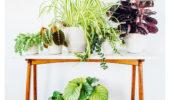 Herfst? Haal wat planten in huis!