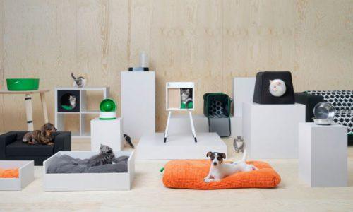 Intussen bij Ikea: de kat kan de Kallax in